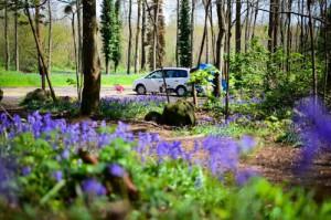 Blumenwiese in Fontainebleau