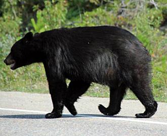 Sondernafertigung Chalkbag mit Bär aus Jasper